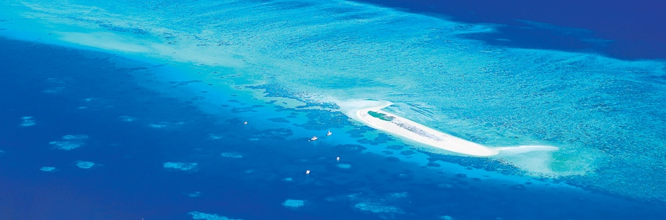 Michaelmas Cay, Great Barrier Reef, Cairns