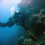 Crown Of Thorns Diver