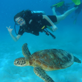 Hands Off! Five Reasons Not to Touch Marine Wildlife