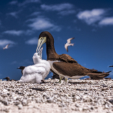 The Birds of Michaelmas Cay
