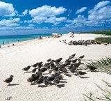 A Little Info on Sand Cays…