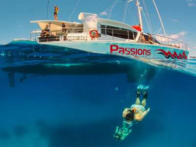 diving and snorkeling on cairns reef tour passions of paradise