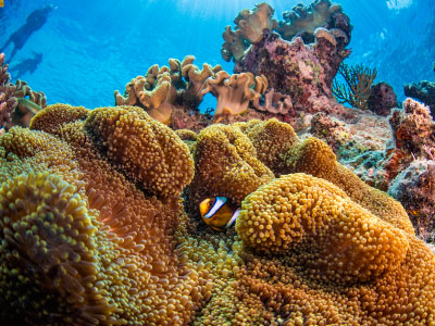 Under Construction: New Coral Reefs