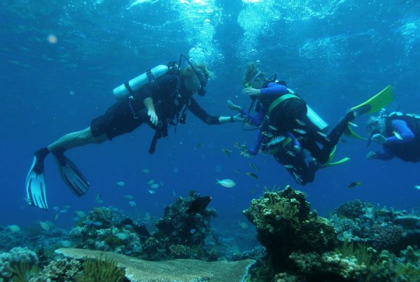 Intro Divers at Paradise Reef passions of paradise