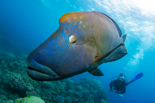 Passions-of-Paradise-Snorkeling,-scuba,-cruises-and-eco-tours-in-Great-Barrier-Reef-6