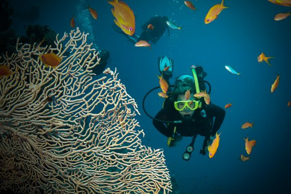 Passions-sailing-home-on-Great-Barrier-Reef 2 (1 of 1)-2