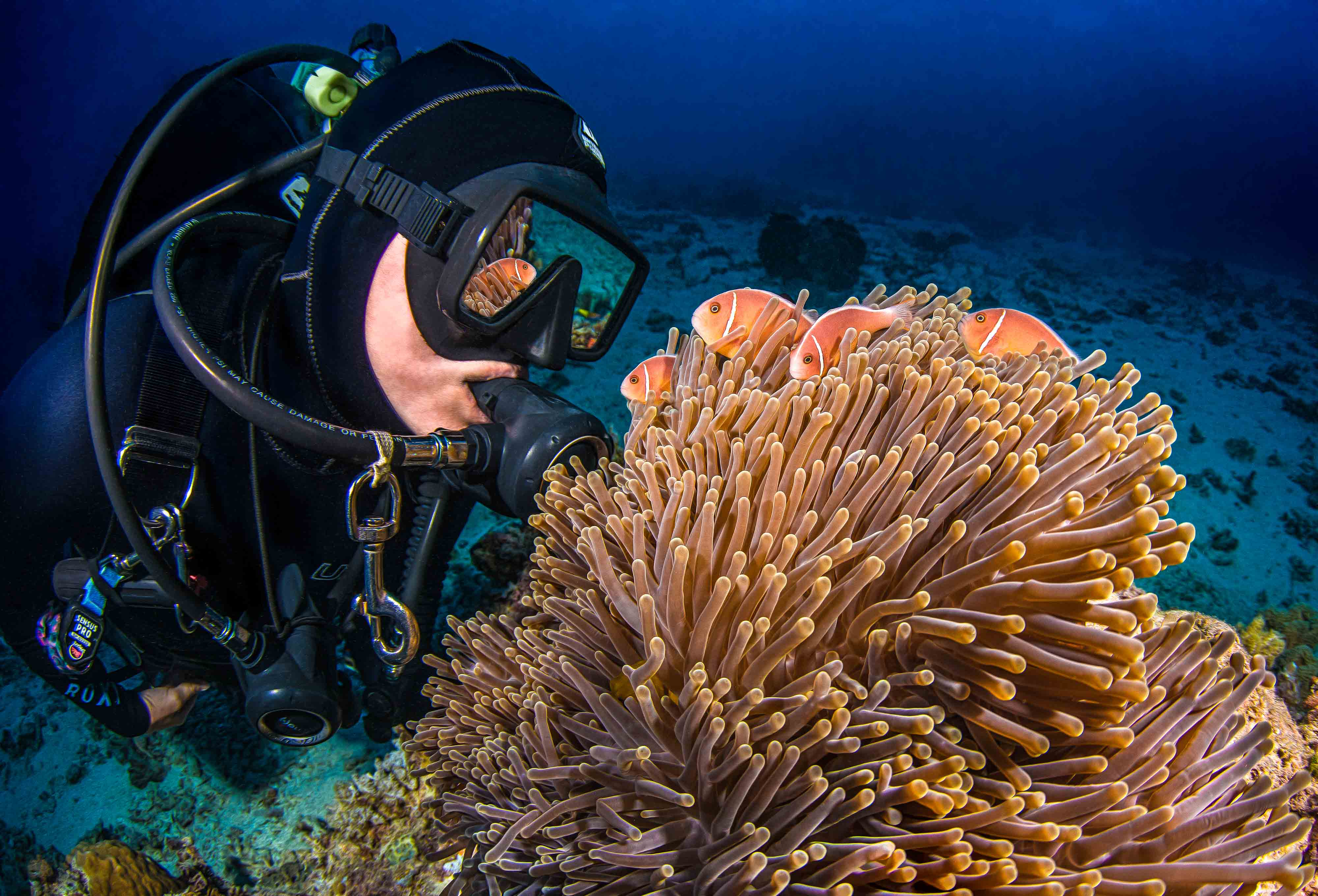 scuba diver looking at fish underwater while scuba diving