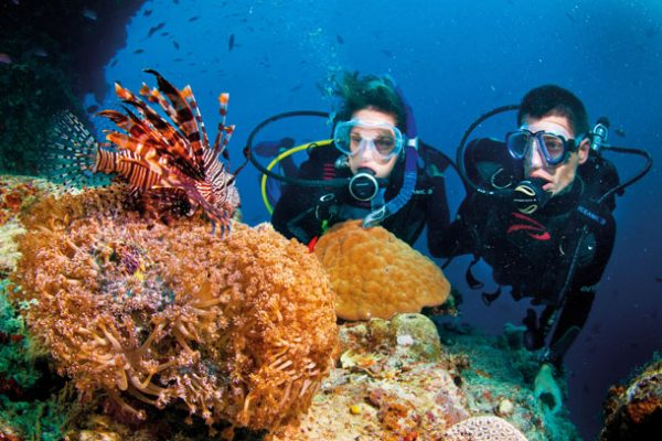 scuba diving in cairns on the great barrier reef with lion fish as introductory divers