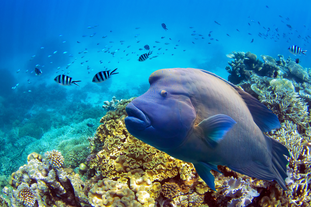 Passions of Paradise Helps Save the Reef!