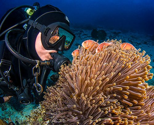 Passions-of-Paradise-Scuba-diver-looking-at-Clown-Fish