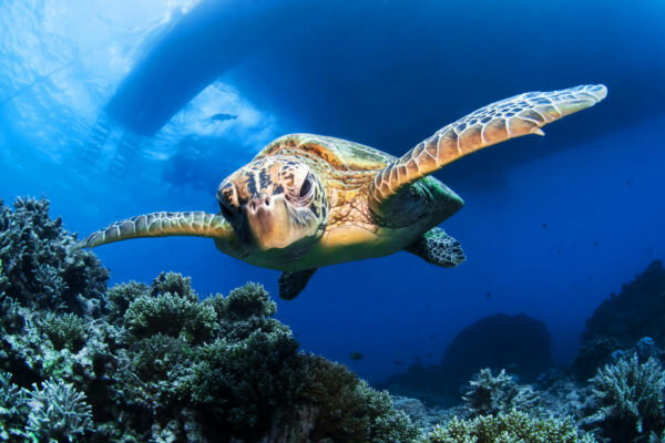Passions-of-Paradise-Snorkeling,-scuba,-cruises-and-eco-tours-in-Great-Barrier-Reef