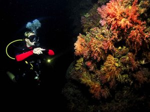night-diving-thailand-koh-lanta-krabi-khao-lak-phuket