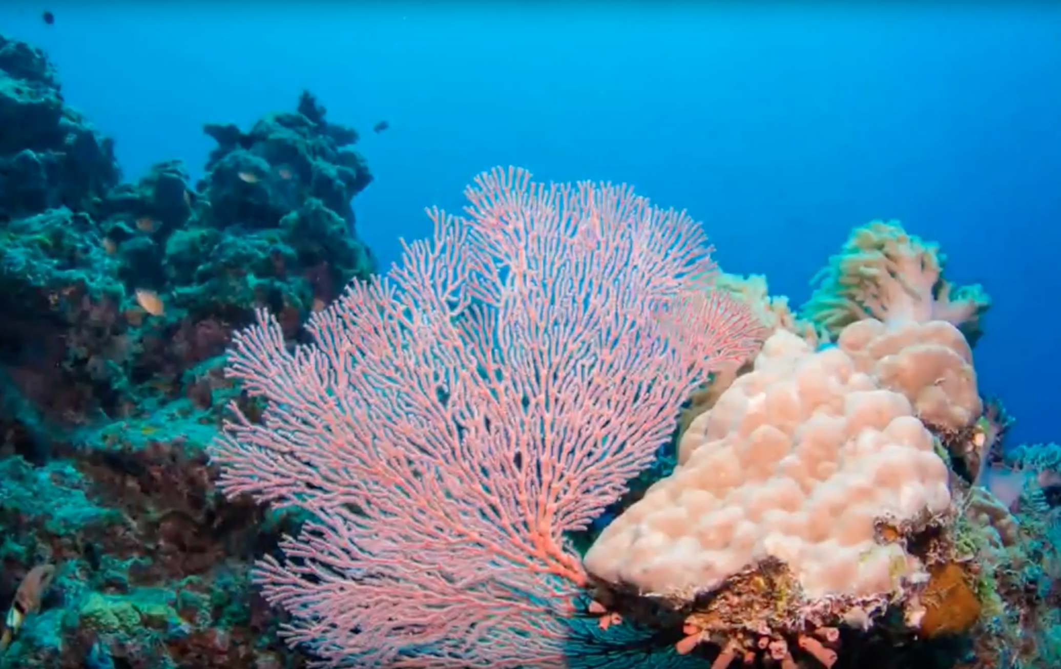 Our favourite time of year on the Great Barrier Reef