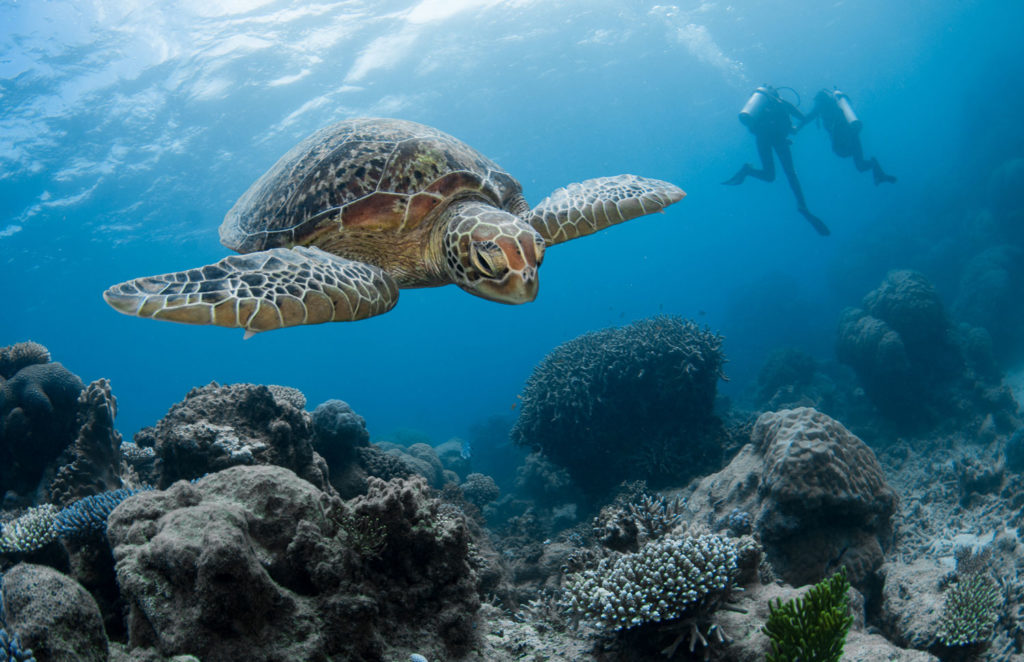 Top 3 Diving Myths On The Great Barrier Reef
