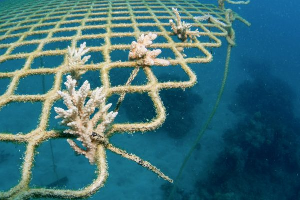 Coral Nuture Program - Coral nursery site - Passions Of Paradise great Barrier Reef Cairns