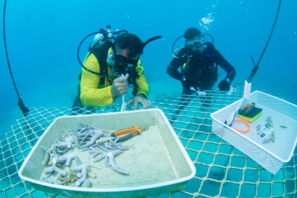 Coral Nuture Program - Coral nursery site - Passions Of Paradise great Barrier Reef Cairns - Russell Hosp and Scotty Garden