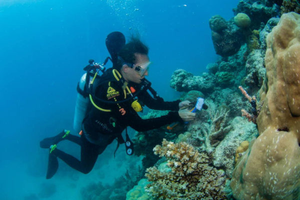 ECo-Tour-Coral-Nursery-and-Coral-planting-Tour-Passions-of-Paradise-3