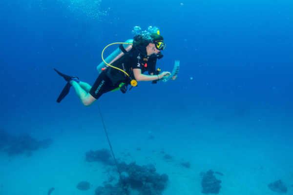 ECo-Tour-underwater--Coral-Nursery-and-Coral-planting-Tour-Passions-of-Paradise
