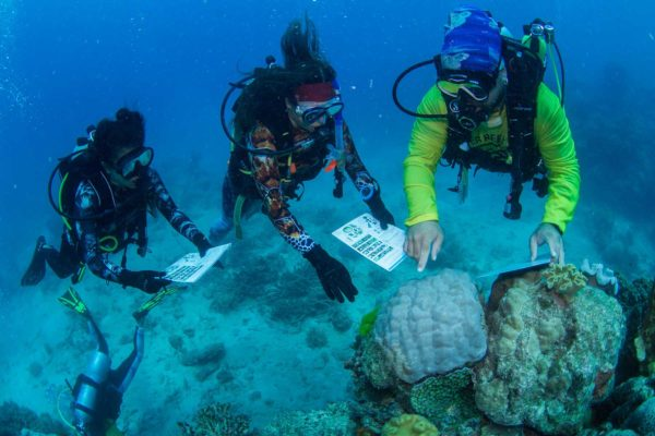ECo-Tour-Coral-Nursery-and-Coral-planting-Tour-Passions-of-Paradise-surveying
